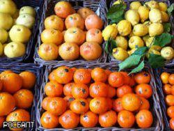 Диетологи: сок грейпфрута помогает похудеть
