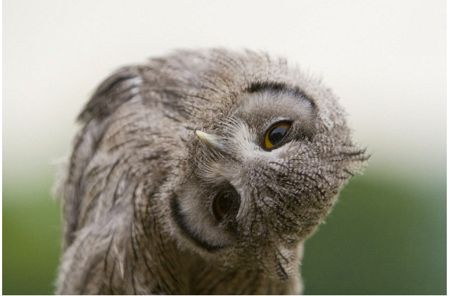 Бар с живыми совами Annie The Owl откроется в Лондоне