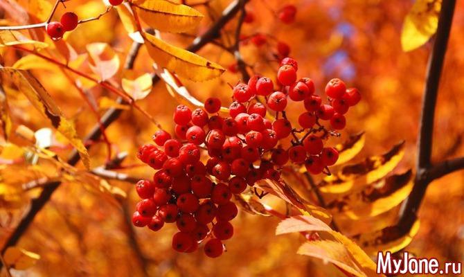 Осенних ягод карнавал