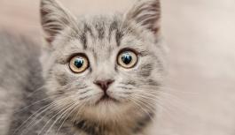 Почему коты боятся огурцов