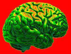 Ученые нашли способ вернуть молодость мозгу