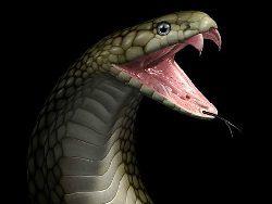 Народное средство от укуса змеи - еще один миф?