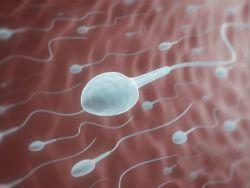 Нездоровый образ жизни мужчин влияет на их сперму