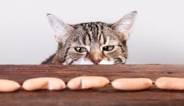 Чем нельзя кормить кошку