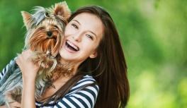 Модные тренды для маленьких собачек