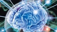 Мозг великий и загадочный - «Прикоснись к тайнам настоящего и будущего»