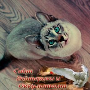 Кошка — индикатор кармы - «Эзотерика»
