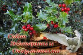 Омела - священное растение кельтов - «Древние культуры»