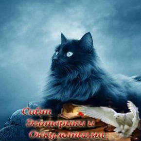 Зачем ваша кошка пришла именно к вам - «Эзотерика»