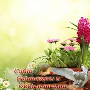 Растения-талисманы, которые защищают дом от всех невзгод - «Эзотерика»