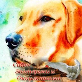 Вот, кому Желтая Собака принесет счастье! А Вы будете этим счастливчиком? - «Эзотерика»