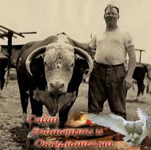 Что будет, если люди не будут есть мясо - «Эзотерика»