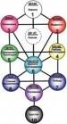 Древо Жизни и духовный путь - «Эзотерика»
