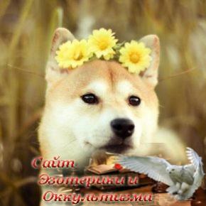Как правильно одеться для встречи года Желтой Земляной Собаки - «Эзотерика»