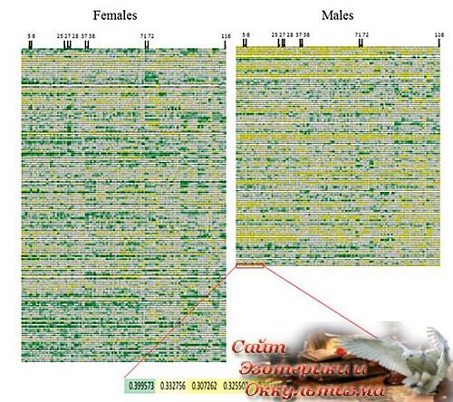 Не существует особенностей «женского» и «мужского» мозга - «Эзотерика»