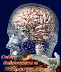 Новая нейрофизиология телесности - «Эзотерика»