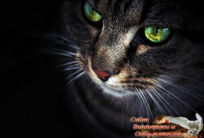 Кошка – магический питомец, который защищает вас и ваш дом от негативной энергии - «Эзотерика»
