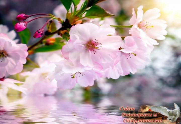 Гороскоп на апрель 2019 года. Апрель - месяц расцвета и возрождения. Эзотерика - Живое Знание - «Эзотерика»