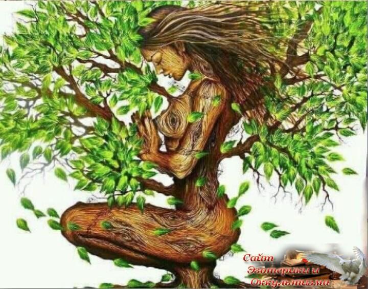 Внутренняя истина. Божественная дихотомия внутренней истины - вашей и других людей. Эзотерика - Живое Знание - «Эзотерика»